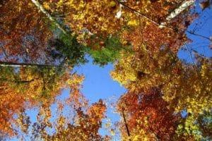 herfst kruidentuin