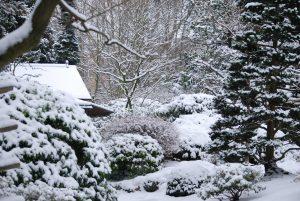 kruidentuin winter